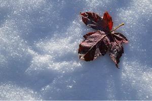 برگ زمستانی